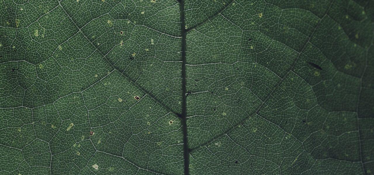 leaf-3634298_1280